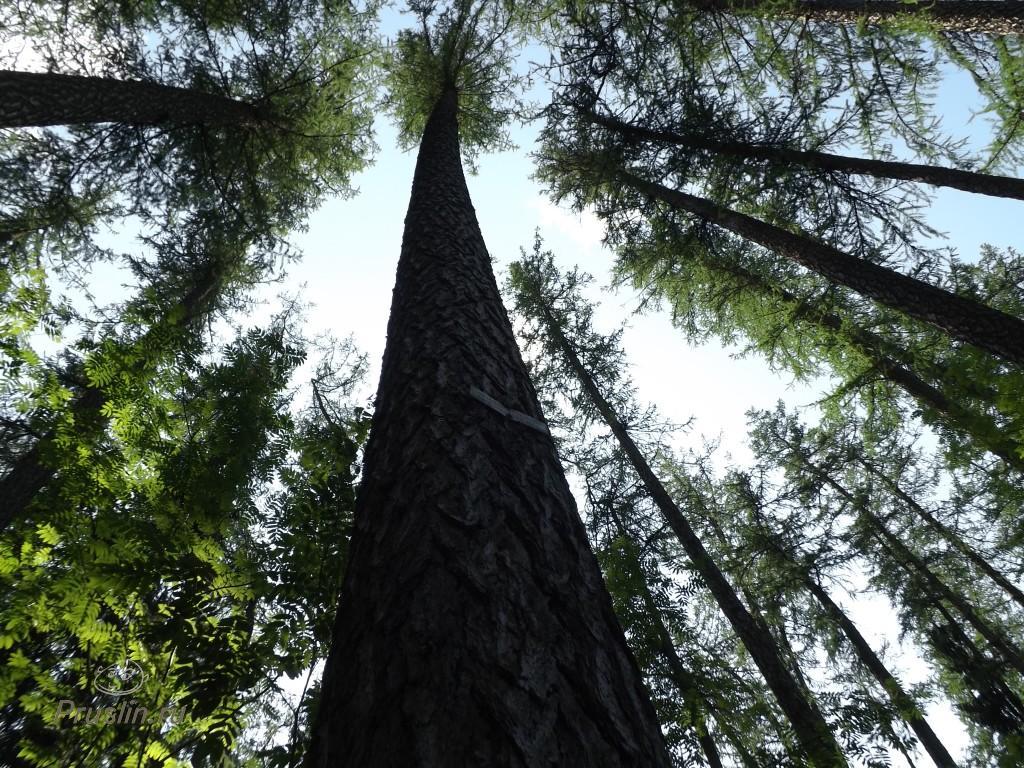 Линдуловская роща, прекрасные леса у Санкт-Петербурга