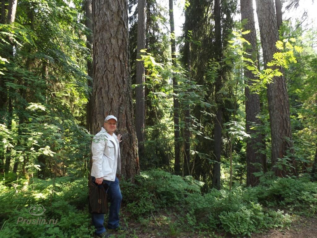Линдуловская роща Деревья