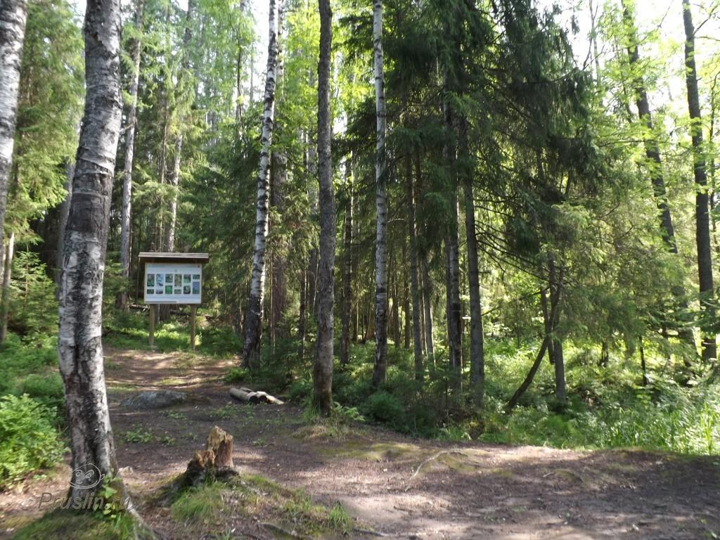 Линдуловская роща Леса