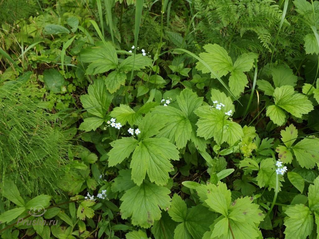 Линдуловская роща Цветочки