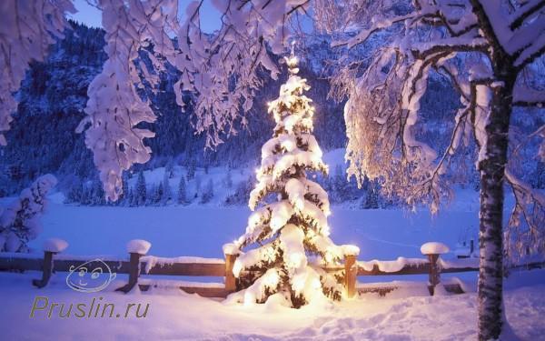 Откуда появилась традиция наряжать ёлку в Новый год?