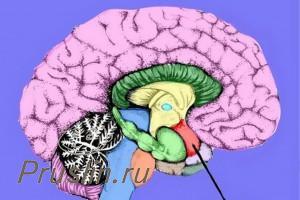 мозжечковую миндалин