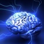 собственный мозг