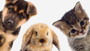 Какое животное можно завести аллергику?